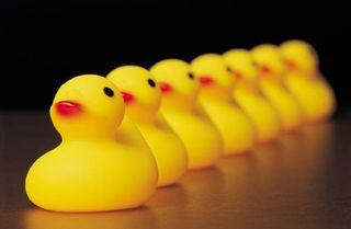 2013-03-22 Yellow ducks in a row