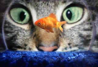 2013-10-04 cat eye and fish