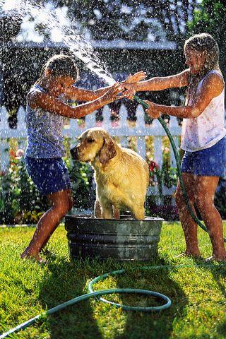 2014-09-19 Dog getting a bath