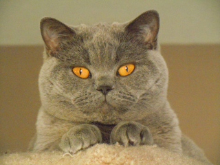 2020 Cat