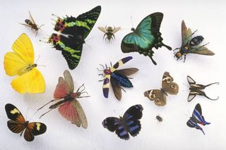 2014-09-26 Butterfly Collection